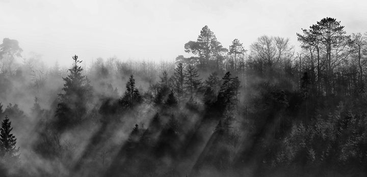 Mist in the Trees 3 - Conor Lynch Photography