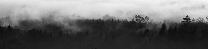 Mist in the Trees 2 - Conor Lynch Photography