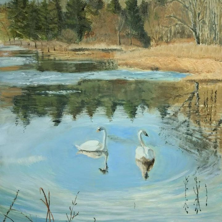 Swans and Spring Ice - ART BY db