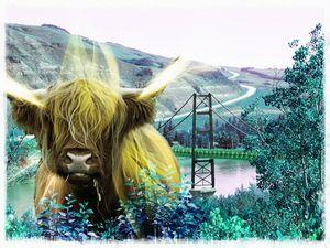 Spirit Ox