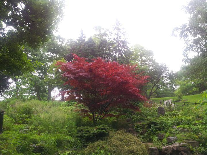 Colour in Nature - RW