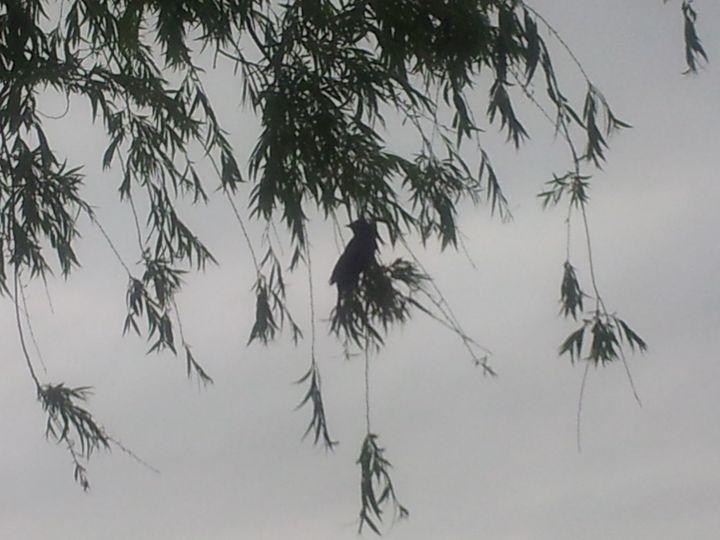 Silhouette of a Bird Bird camouflage - RW