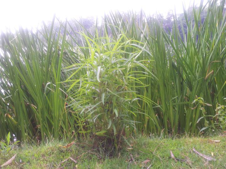 Green Growth - RW
