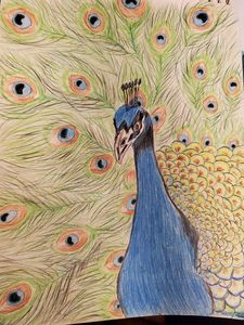 Peacock pencil art