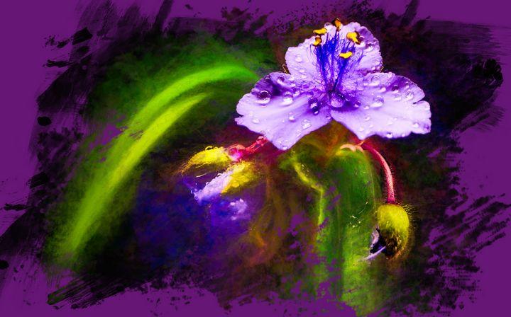 Purple Passion - Magnolia Photography and Digital Art