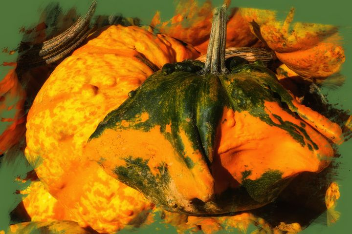 Pumpkin Gourd - Magnolia Photography and Digital Art