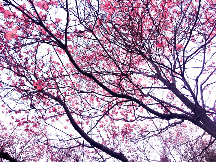 Blooming 2 - Photography