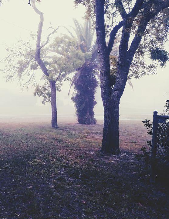 Foggy Tree - sNapTown Art