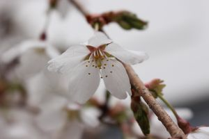 white stunning flower