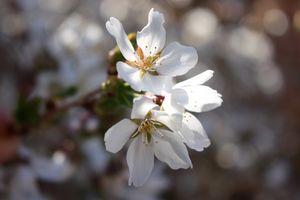 beutiful flower