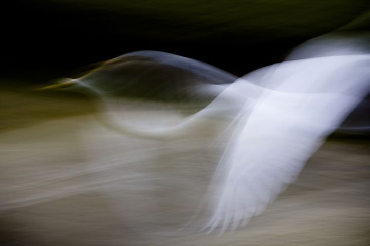 Flight of Fancy - Anne Rodkin Photography