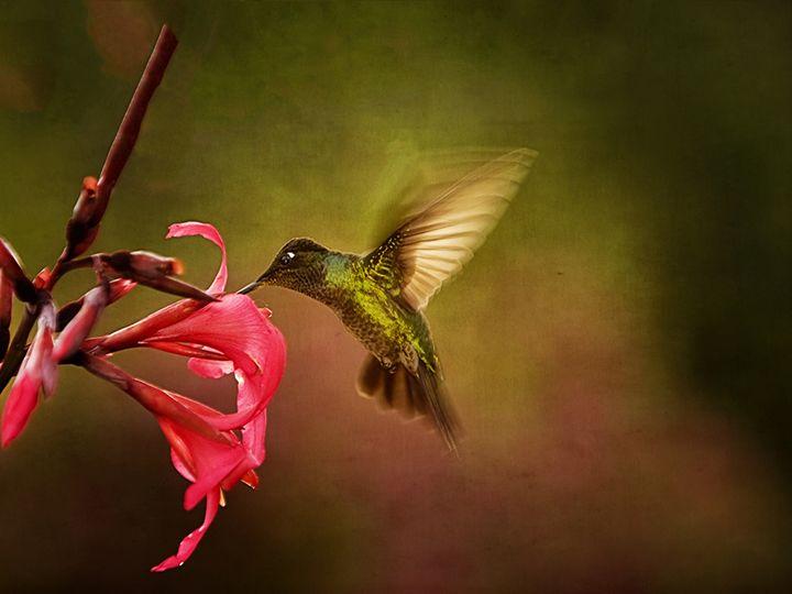 Wings In Motion 2 - Anne Rodkin Photography