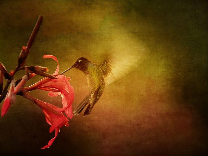 Wings In Motion 1 - Anne Rodkin Photography
