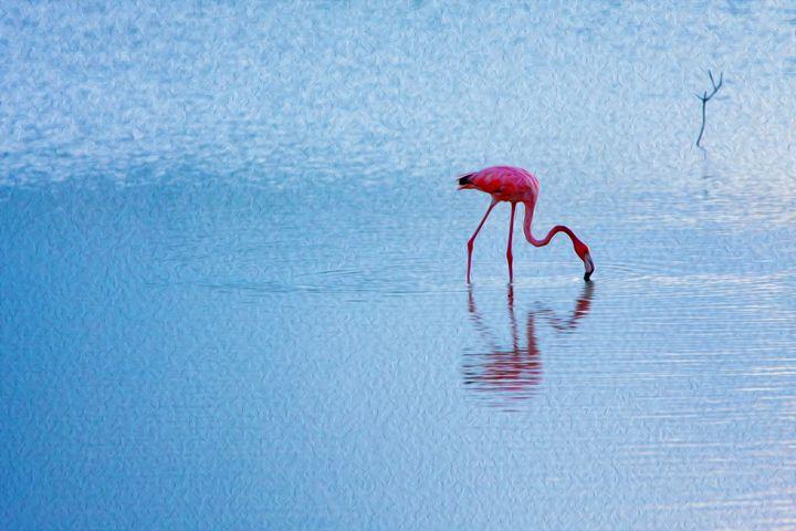 Flamingo Reflection - wanderlust