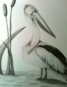 Pelican - Eye Candy Creations