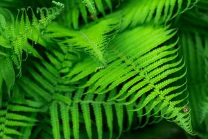 Beautyful young ferns leaves green