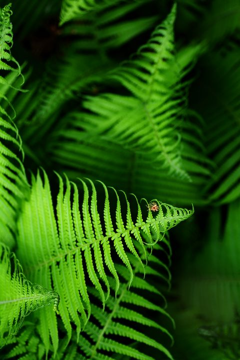 Beautyful young ferns leaves green f - Forisana