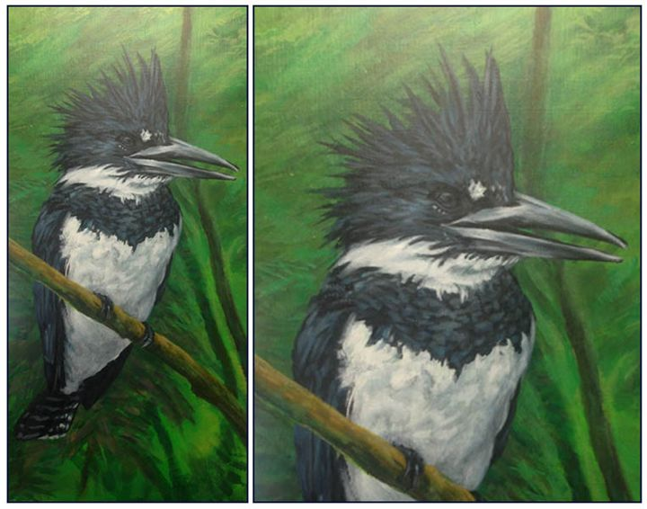 Belted Kingfisher - Keith Murray