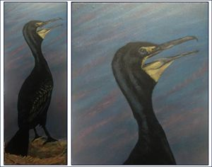 Double Breasted Cormorant - Keith Murray