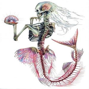 Mermaid Human Skeleton Skull