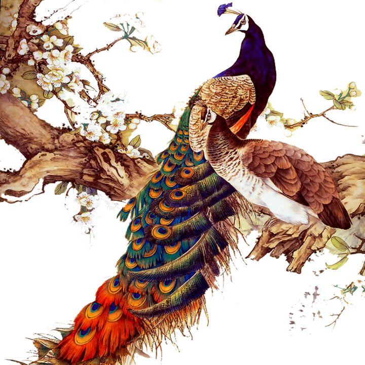 Colorful Peacock - Treasure Hustlers