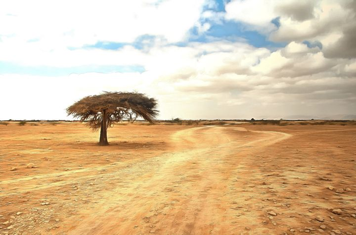 Lone acacia tree in the desert - Chandra