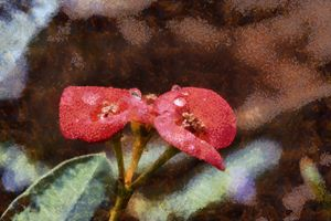 Red flowers with dew drops