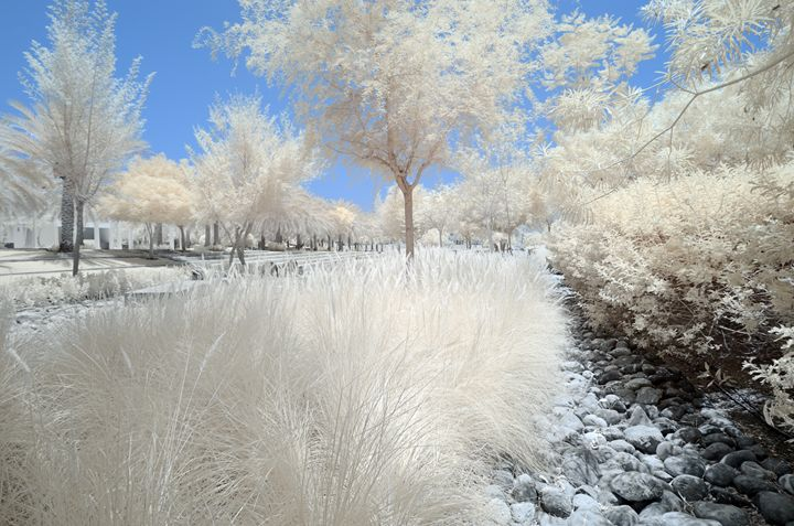 Infrared image of trees and shrubs - Chandra