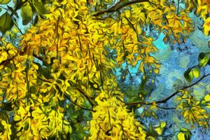 Golden chain tree with flowers