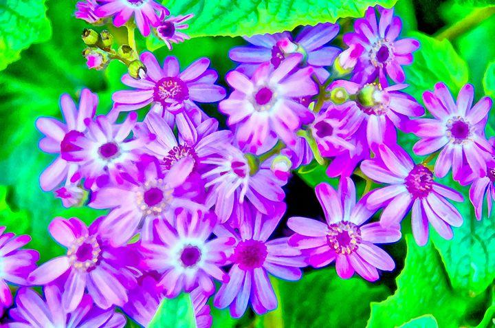 a bush with purple flowers - Chandra
