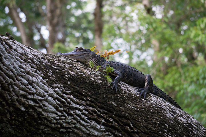Tree Gator - Light & Reason Photos