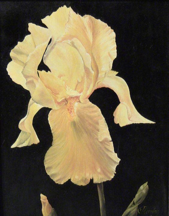 Yellow Iris - Irina Fleming
