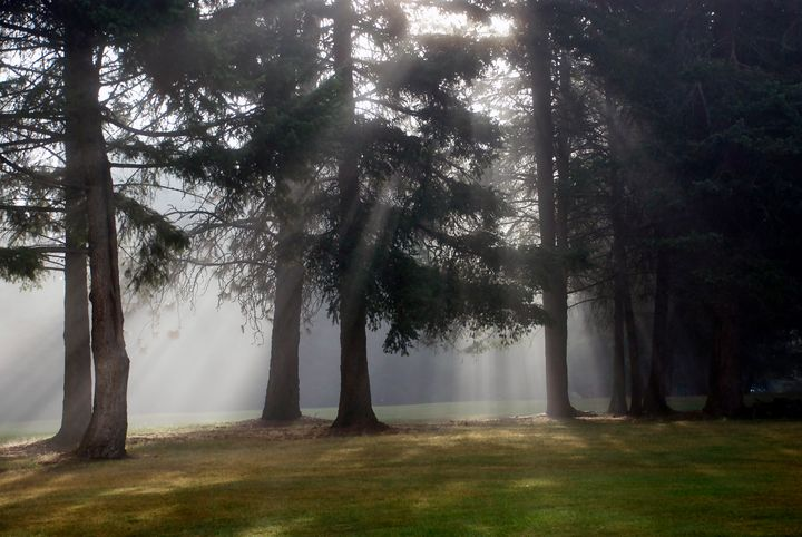 Sun Shining Through the Pines - JTMenkhaus Art