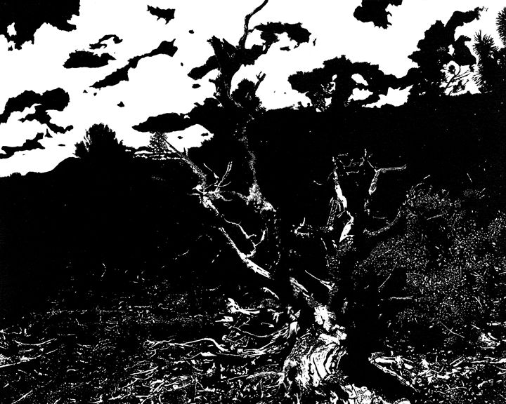 Dead Tree - Jamie Selestewa