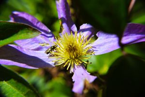Late Pollination