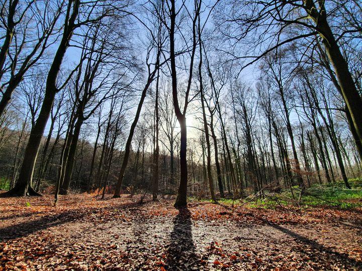 Sun behind the tree - Noemi K