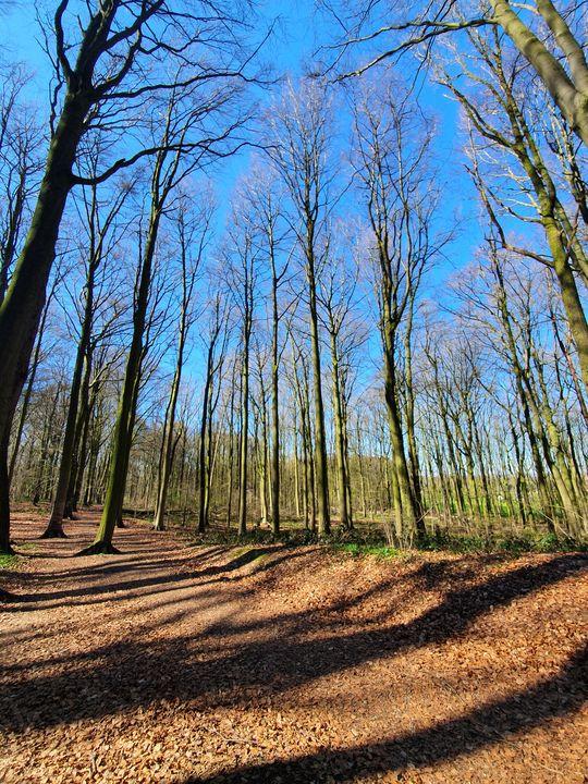 Forest - Noemi K