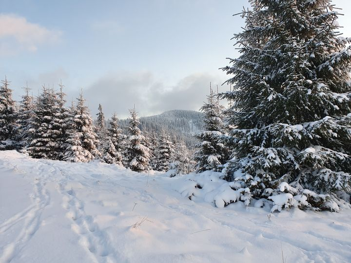 Winter landscape - Noemi K