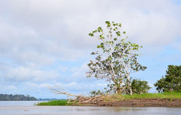 Standing Tree - Thebert Photography
