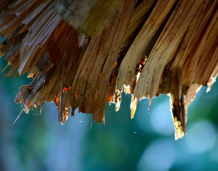 Thatched Roof - Thebert Photography