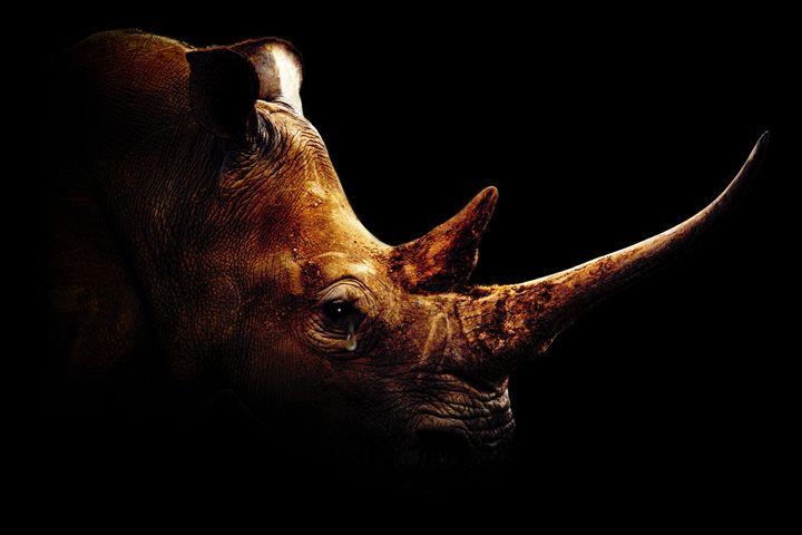 Sad Rhino - psdigital art