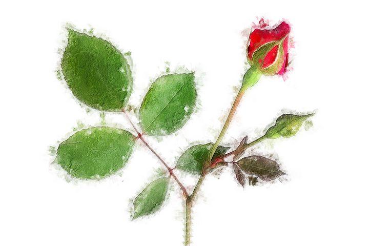 Rose - Deepak Creation