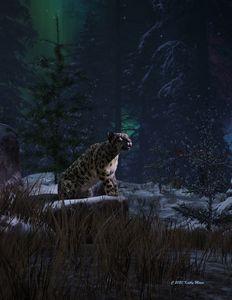 Snow Leopard on Rock Ledge