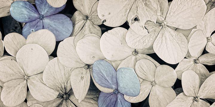 Flower - Vikram Tuli