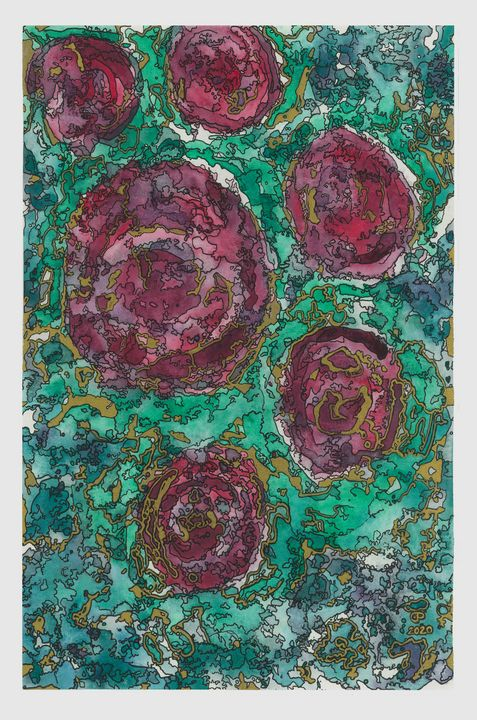 Roses - Coastal Clover