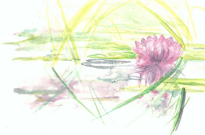 Waterlily - Coastal Clover