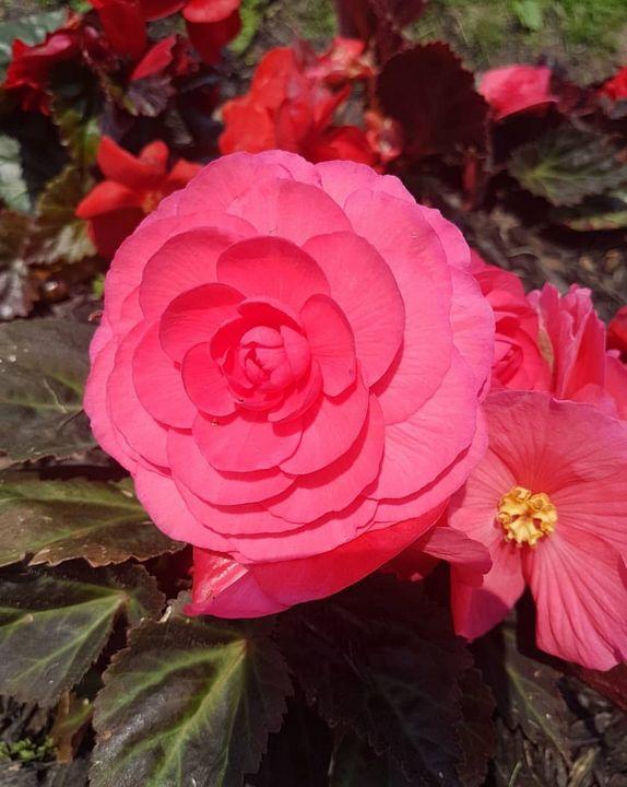 Blooming - Photograph Life