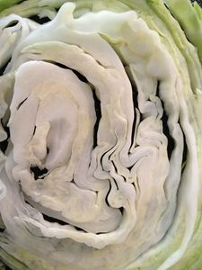 Cabbage Layers - SHWERZ