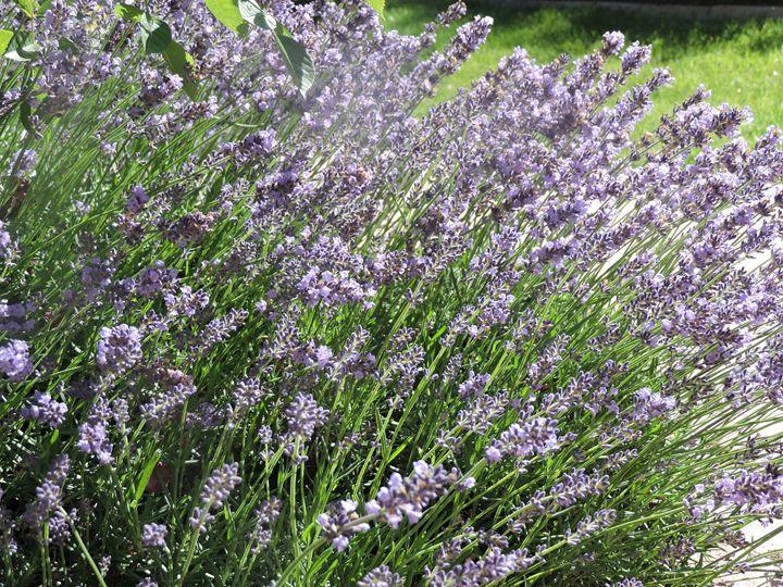 Purple Plant - Mariah W. Photography