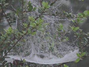 Spider Web Cradle